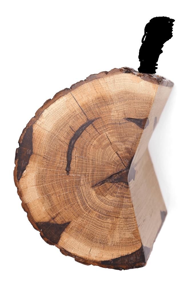 Amber tree trunk