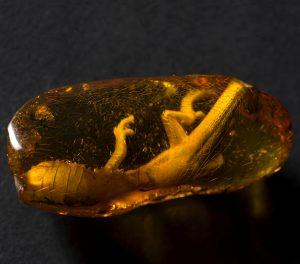 Lizard in Baltic amber | Amber Museum in Gdańsk