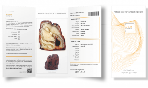 Amber Identification Report